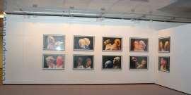 Vista parcial. Exposición Contemporanea Kunstmuseum Wolfsburg, 2005